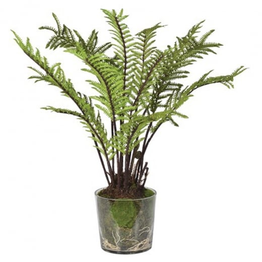 Fern Tree in a Glass Pot