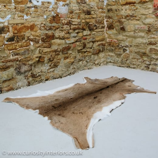 White Tailed Deer Hide Rug From Curiosity Interiors
