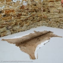White Tailed Deer Hide Rug