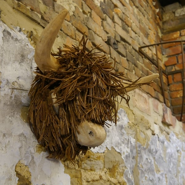 Highland Cow Wooden Wall Mounted Sculpture From Curiosity